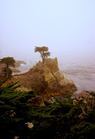 Lone Cypress Tree on 17 Mile Drive